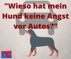 warum hat mein hund keine angst vor autos hundezentrum studydogs essen. Black Bedroom Furniture Sets. Home Design Ideas
