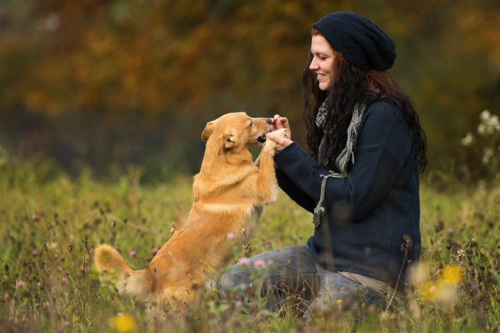 Hundeschule Essen Studydogs