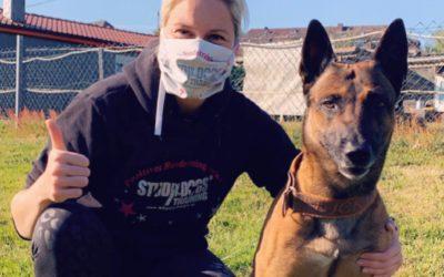 Studydogs und Corona